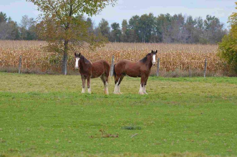 Horse 2 - Lynn Abson - Horses 2 DSC_4051-001