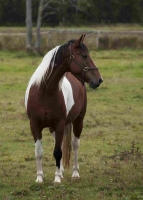 Horse 1 - Marilyn Cottrell Horse 2 on McCaffrey Trail 2015 09
